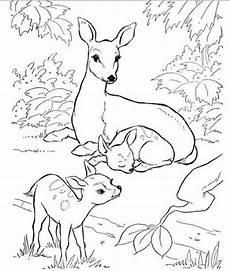 Ausmalbilder Natur Tiere Hinterhof Tiere Und Natur Malb 252 Cher Kostenlos Malvorlagen