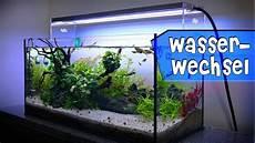 aquariumpflege wasserwechsel detailliert am guppy becken