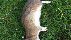 Ratten Im Garten Bek 228 Mpfung