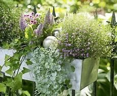 blumen für südbalkon zum nachpflanzen balkonkasten mit federbusch und