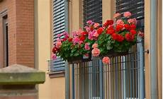 Best Plants For Window Boxes Sun Or Shade The
