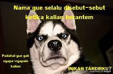 Gambar Anjing Marah Lucu Lucu Sekali Ayo Ketawa