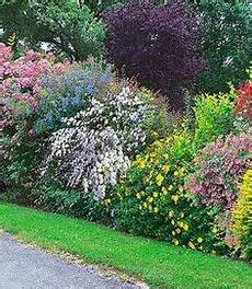 pflanzen für hecke hedge row with different plants more interesting than a