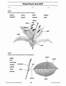 14 best images of parts of a plant worksheet first grade printable plant parts of a flower