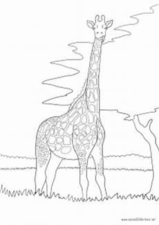 giraffe zum ausmalen malvorlagen tiere kostenlos