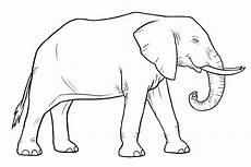 ausmalbilder elefanten kostenlos malvorlagen zum