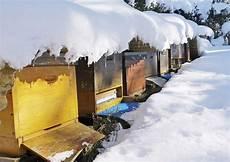 was machen bienen eigentlich im winter bienen natur