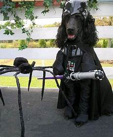 Wars Hund - 15 dogs dressed as wars characters