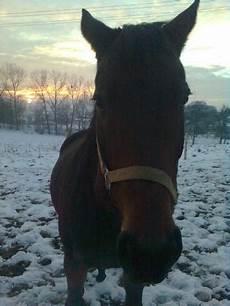 wie lange darf ich meinen kaminofen noch betreiben wie lange darf ein pferd bei eisigen temperaturen auf die weide pferde winter