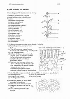 plant structure worksheet plant structure and function 6th 12th grade worksheet lesson planet