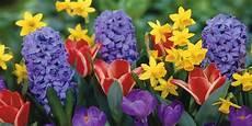 nomi di fiori esotici nomi e immagini di fiori di primavera 35 foto