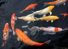 Gambar Foto Ikan Hiu Menyeramkan Wallpapersforfree