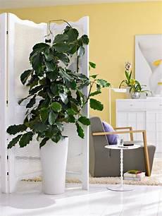 gr 252 npflanzen f 252 r jeden wohnstil wohnen wohnzimmer