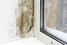 What To Do About Mold On Windows Modernize