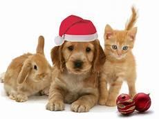 kingsbrook animal hospital s blog merry christmas