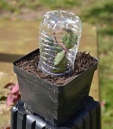 pflanzen bewässern mit plastikflasche blumenk 252 bel bepflanzen kurzanleitung und beste tipps f 252 r dauerhafte bepflanzung garten