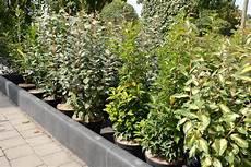 Haie De 6 Arbustes Persistants Fermeture Visuelle Toute L