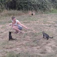 attraper des chats sauvages