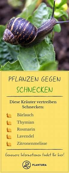 Pflanzen Gegen Schnecken Was Hilft Wirklich Pflanzen