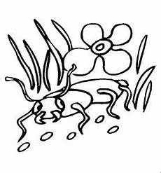 Insekten Malvorlagen Tiere Insekten 00236 Gratis Malvorlage In Insekten Tiere Ausmalen