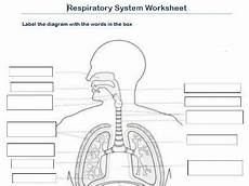 label the respiratory system worksheet by scottactive teaching resources
