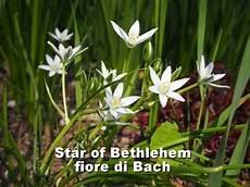fiori d bach fiori di bach of bethlehem fioridibach