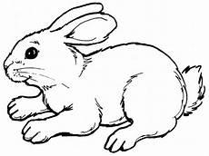 Malvorlagen Tiere Kostenlos Quiz Kostenlose Ausmalbilder Tiere 20 Malvorlagen Zum