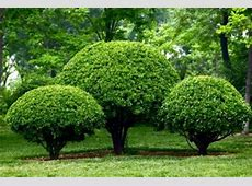 Small Trees for Landscaping Types Designs Ideas Picture