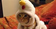 Gambar Kucing Lucu Dengan Aksi Ekspresi Lucu