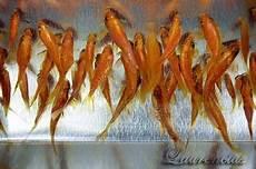 Foto Lukisan Ikan 3d Karya Seniman Jepang Riusuke