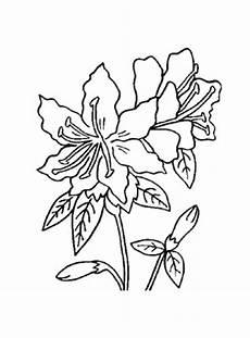 Ausmalbilder Blumen Pdf Ausmalbilder Rhododendron Blumen Malvorlagen Ausmalen
