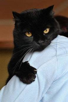 659 best black cats matter images in 2018 black cats