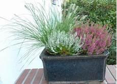 balkonpflanzen herbst winter schatten archives seite 2 2 balkon oasebalkon oase