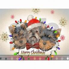 yorkie christmas postcards package of 8 by petventuresusa cafepress