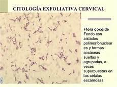 flore de doderlein citologia exfoliativa cervical