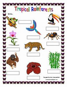 rainforest animals worksheets elementary 13860 315 free environment and nature worksheets