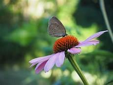 Malvorlagen Insekten Um 3 Einfache Wege Um Im Alltag Insekten Zu Sch 252 Tzen