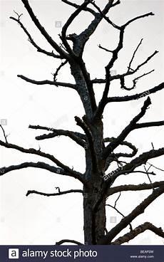 arbre mort achat haut d un arbre mort banque d images photo stock