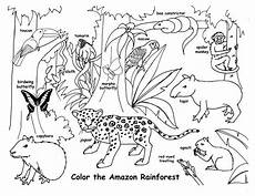 rainforest animals coloring pages preschool 17131 drawing lessons for a whole rainforest picture pdf http www exploringnature org