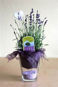 topfblumen als geschenk verpacken lavendel sch 246 n verpackt als gastgeschenk joinmygift