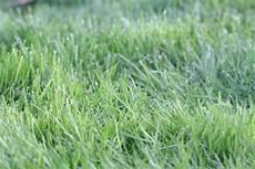 Rasen M 228 Hen Nach Aussaat Wann Es F 252 R Das 1 Mal Soweit Ist