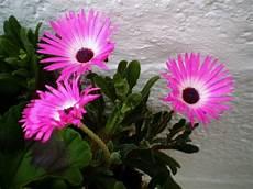 Plante Grasse 224 Fleurs S 233 Lection Des Plus Belles Plantes