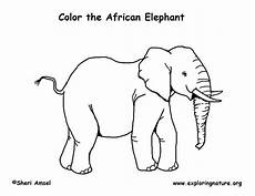 elephant coloring page