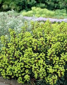 bodendecker f 252 r schatten 10 pflanzen die sich gut eignen