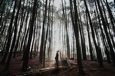 Terpopuler 30 Background Hutan Pinus