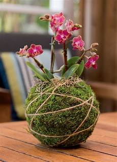 indooroutdoor hanging moss balls filled with plants kokedama string gardening kokedama kit japanese moss balls