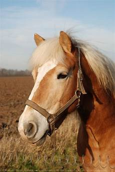 ffe trouver un cheval comment retrouver un cheval
