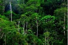 Jangan Lagi Rusak Hutan Di Padang Portal Berita Singgalang