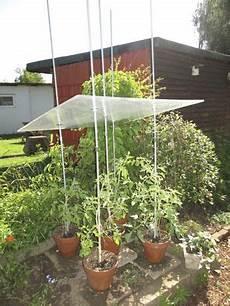 gewächshaus tomaten selber bauen tomatendach bauanleitung zum selber bauen heimwerker forum garten tomaten dach garten