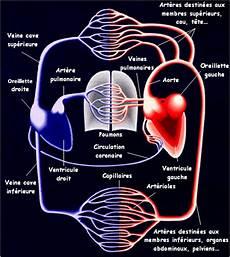 appareil cardio cours